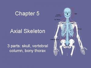 Chapter 5 Axial Skeleton 3 parts skull vertebral