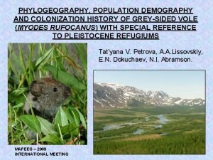 PHYLOGEOGRAPHY POPULATION DEMOGRAPHY AND COLONIZATION HISTORY OF GREYSIDED