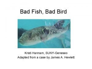 Bad Fish Bad Bird Kristi Hannam SUNYGeneseo Adapted