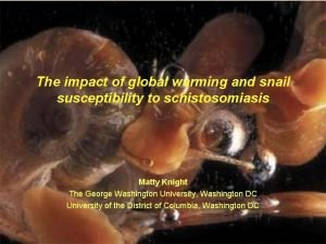 The impact of global warming and snail susceptibility