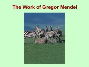 The Work of Gregor Mendel Gregor Mendels Peas