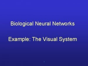 Biological Neural Networks Example The Visual System 1