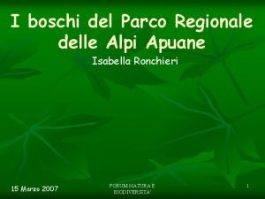 I boschi del Parco Regionale delle Alpi Apuane