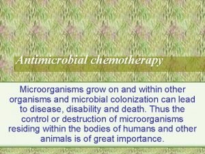 Antimicrobial chemotherapy Microorganisms grow on and within other