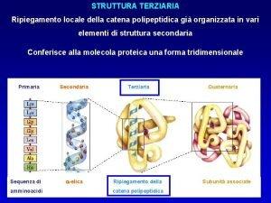 STRUTTURA TERZIARIA STRUTTURA NATIVA Ripiegamentoconformazione locale della catena