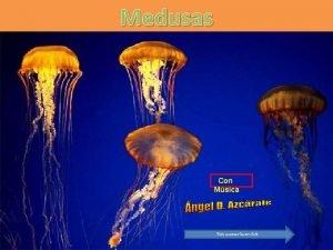 Medusas Con Msica Para avanzar hacer click Carecen
