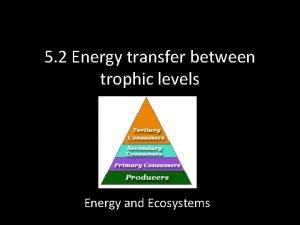 5 2 Energy transfer between trophic levels Energy