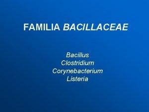 FAMILIA BACILLACEAE Bacillus Clostridium Corynebacterium Listeria Familia Bacillaceae