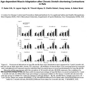 Agedependent Muscle Adaptation after Chronic Stretchshortening Contractions in