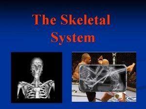 The Skeletal System The Skeletal System Components n