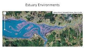 Estuary Environments Salmon RiverCobequid Estuary Nova Scotia Estuary