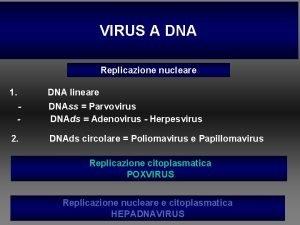 VIRUS A DNA Replicazione nucleare 1 2 DNA
