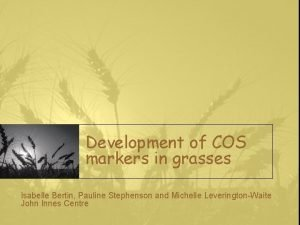 Development of COS markers in grasses Isabelle Bertin