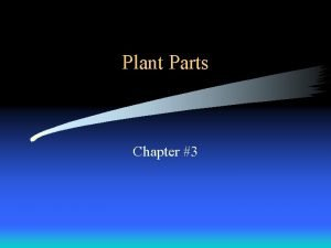 Plant Parts Chapter 3 What are the parts