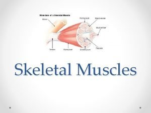 Skeletal Muscles Histology fascicle Whole muscle Muscle fiber