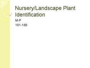 NurseryLandscape Plant Identification MP 161 189 161 Magnolia