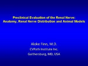Preclinical Evaluation of the Renal Nerve Anatomy Renal