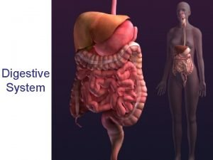 Digestive System Oral Cavity Mouth Teeth tongue and