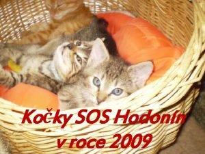 Koky SOS Hodonn v roce 2009 Jsme soukrom
