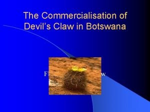 The Commercialisation of Devils Claw in Botswana Flowering