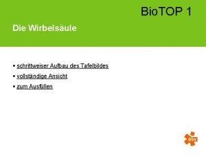 Bio TOP 1 Die Wirbelsule schrittweiser Aufbau des
