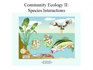 Community Ecology II Species Interactions Ecological communities Assemblages