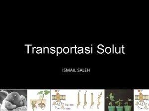Transportasi Solut ISMAIL SALEH Transportasi Ion pada Akar