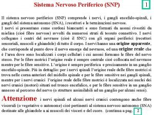 Sistema Nervoso Periferico SNP 1 Il sistema nervoso