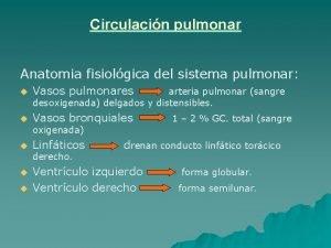 Circulacin pulmonar Anatomia fisiolgica del sistema pulmonar u