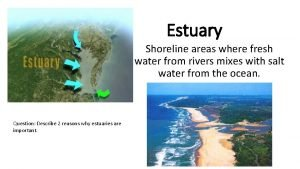 Estuary Shoreline areas where fresh water from rivers