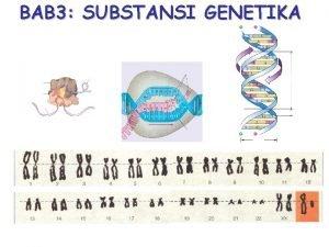 BAB 3 SUBSTANSI GENETIKA KROMOSOM Bagianbagian kromosom 1