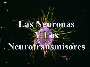 Las Neuronas Y Los Neurotransmisores NEURONAS Diferencias Axones