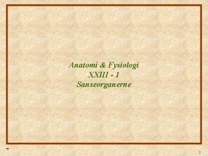 Anatomi Fysiologi XXIII 1 Sanseorganerne 1 Anatomi Fysiologi