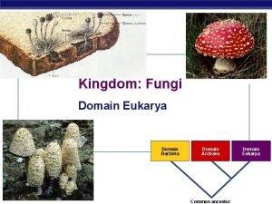 Kingdom Fungi Domain Eukarya Domain Bacteria AP Biology