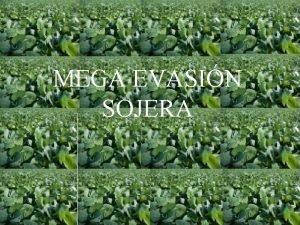 MEGA EVASIN SOJERA PRODUCTORES RURALES Vendan cereal en