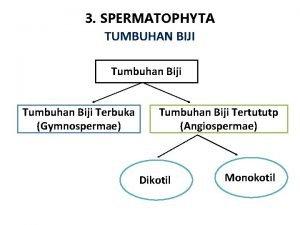 3 SPERMATOPHYTA TUMBUHAN BIJI Tumbuhan Biji Terbuka Gymnospermae