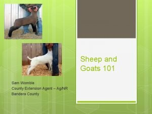 Sheep and Goats 101 Sam Womble County Extension