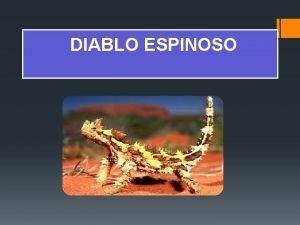 DIABLO ESPINOSO El diablo espinoso es una especie