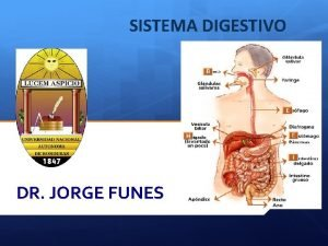 SISTEMA DIGESTIVO DR JORGE FUNES SISTEMA DIGESTIVO El