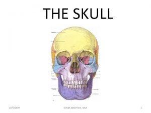 THE SKULL 1262020 SCNM ANAT 604 Skull 1