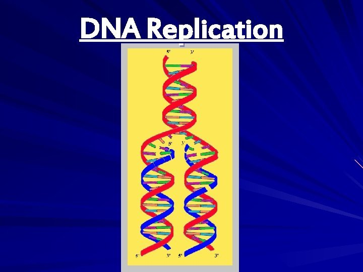 DNA Replication DNA Replication v Replication DNA copies
