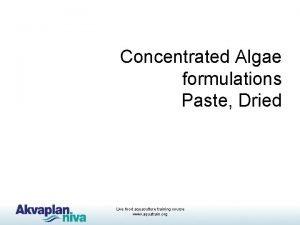 Concentrated Algae formulations Paste Dried Live food aquaculture