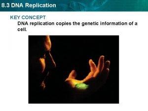 8 3 DNA Replication KEY CONCEPT DNA replication