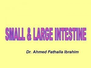 Dr Ahmed Fathalla Ibrahim ABDOMINAL VISCERA FOR EACH