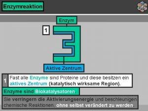 Enzymreaktion Enzym 1 Aktive Zentrum Fast alle Enzyme