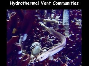 Hydrothermal Vent Communities Hydrothermal vent discovery1977 Hydrothermal Vents