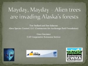 Mayday Mayday Alien trees are invading Alaskas forests