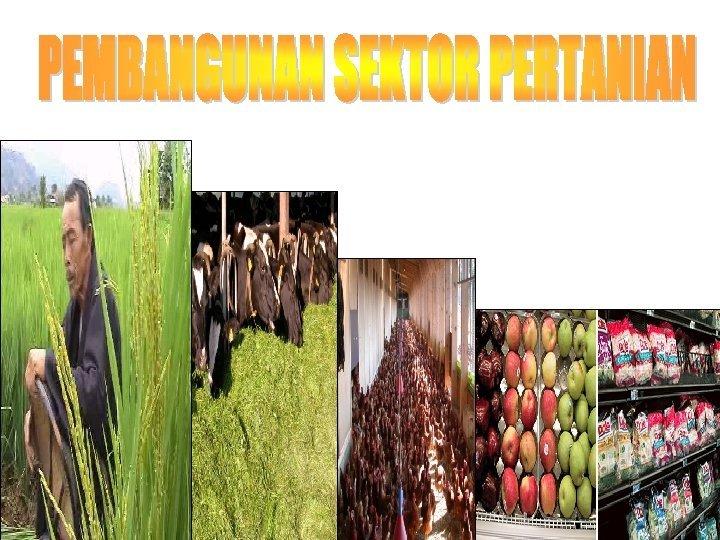 Pertanian dalam Pembangunan Sektor pertanian merupakan sektor prioritas
