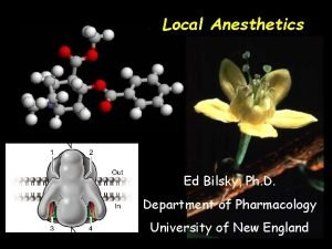Local Anesthetics Ed Bilsky Ph D Department of
