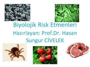 Biyolojik Risk Etmenleri Hazrlayan Prof Dr Hasan Sungur